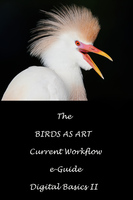 The BIRDS AS ART Current Workflow e-Guide (Digital Basics II)