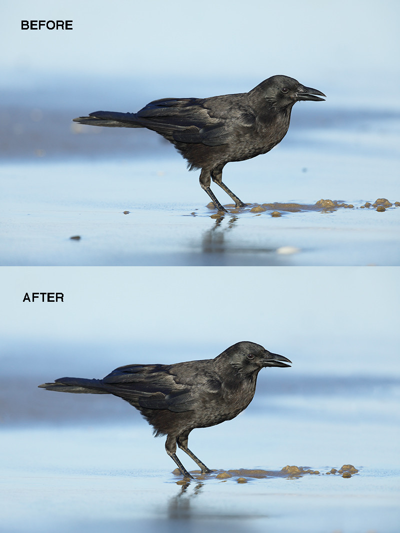 MP4 Crow Cleanup video