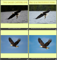 Two Eagles Capture One & More MP4 Video