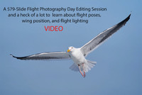 The Flight Photography Editing and Education Video