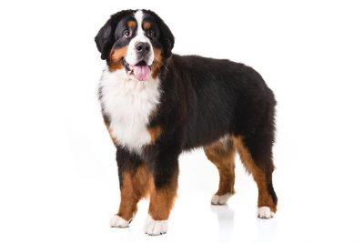 Big Dog Bigger Job Show Dog Store