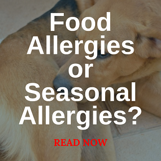 foodallergies.png