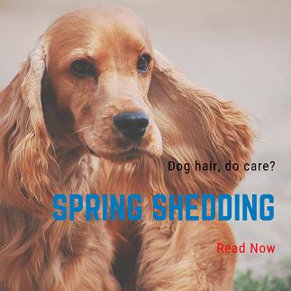 springshedding.png