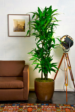 Great #1 Best Office Plant