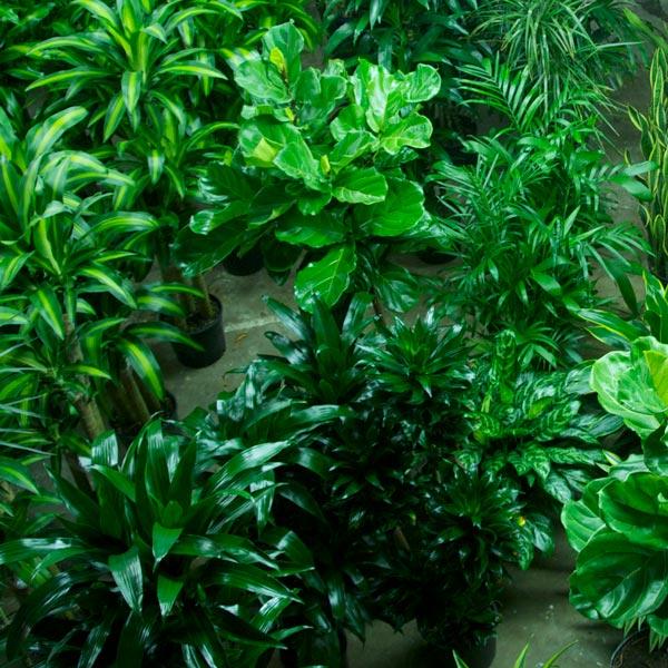 Shop For Plants