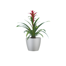 Single Purple Bromeliad Combo