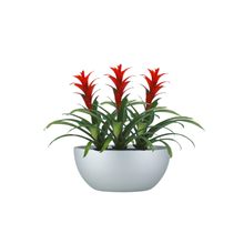 The Bromeliad Red/Orange Guzmania Trio in Bowl