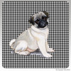 Pug PuppyHoundzstooth Coasters