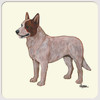 Australian Cattle Dog Red Merle Coasters