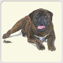 Bull Mastiff Beverage Coasters