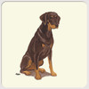 Red Doberman Uncropped Coasters