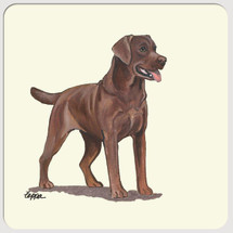 Labrador Retriever, Chocolate Beverage Coasters