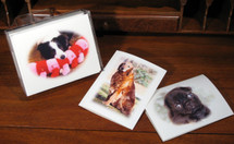 Custom Note Cards from Your Photo/Images