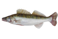 "Walleye 3""-4"" (per 100) (Fall Stocking Only)"