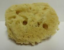 Chalice Sponge