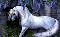 Magickal Unicorns Message of insight or guidance 1 question reading
