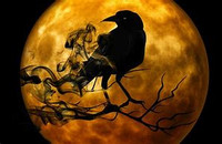 Mysterious Magickal Raven spirit animal Abilities bestowed on you ~ Transformation Rejuvenation