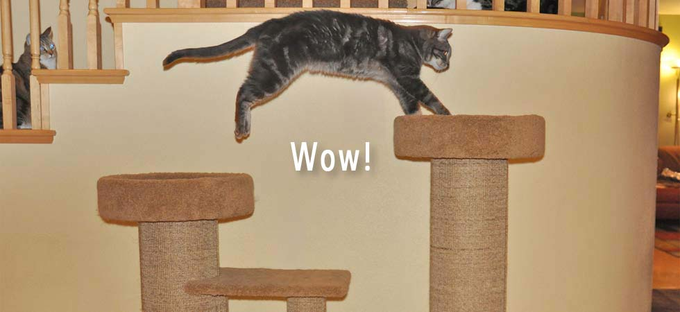 Purrfect Post Sisal Cat Scratching Posts Veterinarian Designed