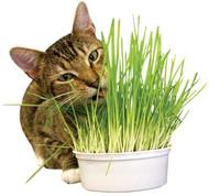 Easy Grow Oat Grass Kit
