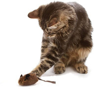 Chocolate Mouse Hunter