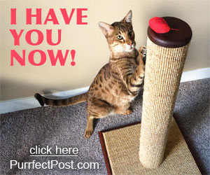 Playing with your cat can be fun with a purrfect post..