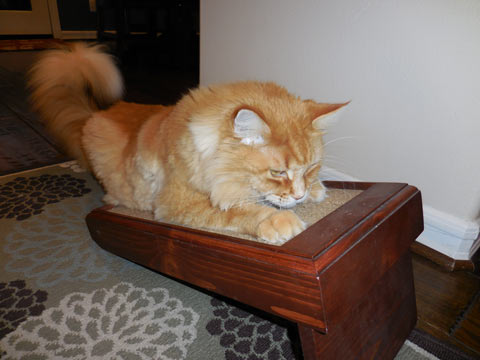 Cats may enjoy an angle scratcher near a resting spot.