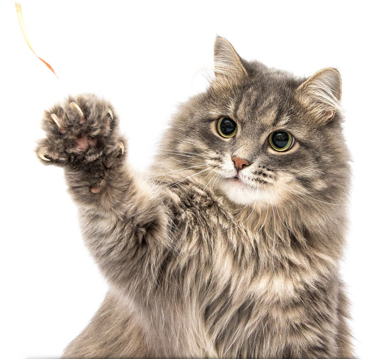 Declaw surgeries are no longer legal in the state of New York.