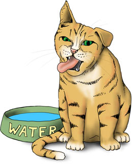 cat pawing at water bowl