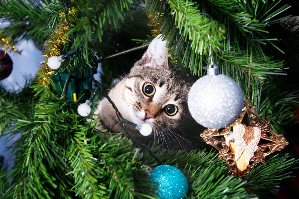 Use these tips to keep your cat off the Christmas tree