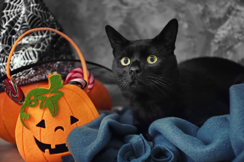 Tips for Halloween cat safety.