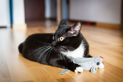 Find out why cats like catnip.