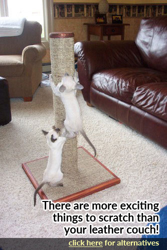 How To Train Your Cat To Use A Scratching Post Purrfectpost Com
