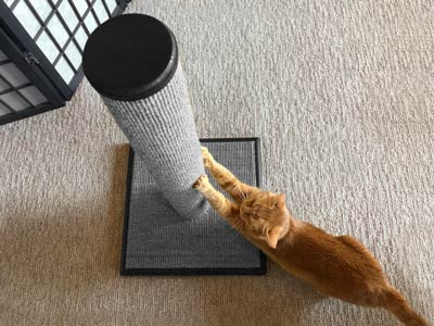Little Orange Dude is getting his stretch on with the NEW Contermorary Gray Purrfect Post