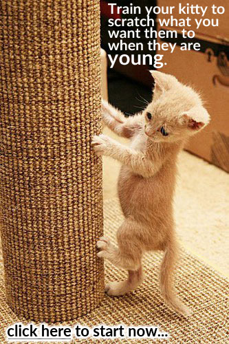 There are advantages to training cats habits at a young age