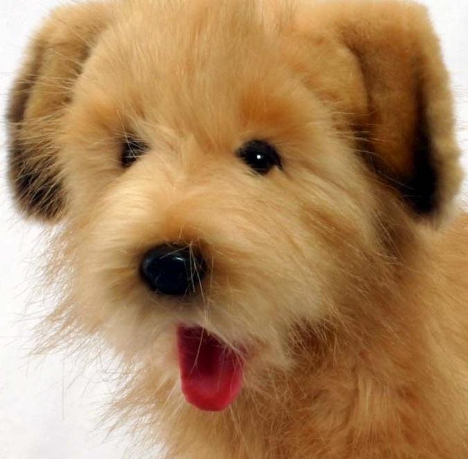 Hansa Terrier