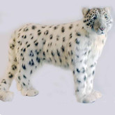 Hansa Snow Leopard, Standing 49''L