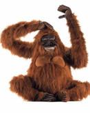 Hansa Orangutan, Life Sz 40''L (3396)