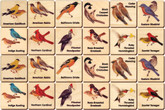 Memory Tiles, Backyard Birds by Maple Landmark