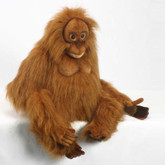 Hansa Orangutan, Clyde 20'' (3945)