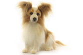 Hansa Papillion Dog, 16'' (3993)