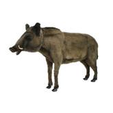 "Hansa Wild Boar, Life Size 57""L (4334)"