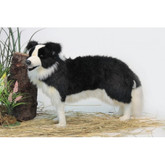 Hansa Border Collie, Standing 33''L (4563)