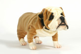 Hansa English Bulldog, 14'' (5626)