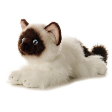 With a chocolate face, tail, and ears, Bella the 12 inch long Birman Cat will steal your heart. Her coat is fluffy and white, her ears are pink, and her eyes striking blue.