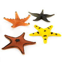 Assorted Starfish