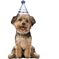 Party Pup Airwalker Foil Balloon