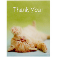 rachaelhale Glamour Cats Thank-You Notes