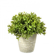 "Potted Spring Boxwood Dome Topiary, 8"" Artificial"