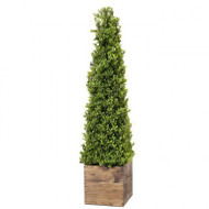"Spring Boxwood Obelisk in Wood Box, 36"" Artificial"