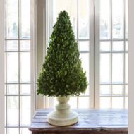 "34"" Preserved Boxwood Cone Tree On Decorative Stand by Park Hill"